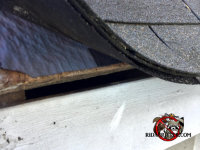 Bat Removal In Atlanta Marietta Peachtree City And The