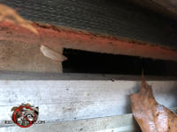Half inch gap between the plywood roof sheathing and the fascia that allowed bats to get into the attic of a house in Marietta Georgia