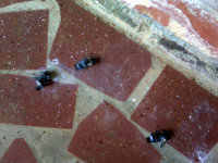 Dead carpenter bees on patio floor in Atlanta
