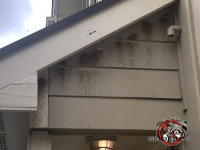 Frass stains on the siding of a house in Decatur Georgia from the carpenter bees wax and dropping dripping from the holes
