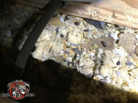 Insulation contaminated with animal urine and feces in the attic of a house in Atlanta