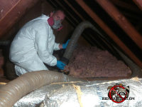 Man in attic removing animal contaminated insulation from a Duluth home