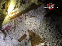 Squirrel droppings and urine in the attic insulation of a house in Stone Mountain Georgia