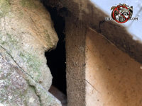 There is a gap between the stone chimney and the rest of the house and the mice used it to get into the house