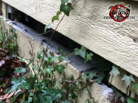 Opossums got into a house in Atlanta because a row of cinder blocks right under the bottom of the siding were removed