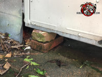 The door of a garage in Marietta Georgia is propped up on two bricks and the opossum simply in under the door