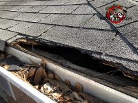 The wood and shingles are torn off the edge of a roof in Atlanta where a raccoon was trying to get inside.