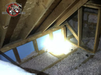 Flattened out insulation and a small pile of raccoon scat are evidence of a raccoon problem in the attic of an Atlanta home