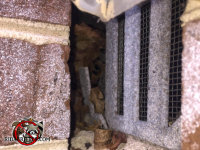 Rats got into a house in Atlanta through a gap in the corner by a foundation vent