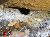 Because the cement was not properly mixed, rats were able to gnaw a hole through it to get into a house in Atlanta Georgia
