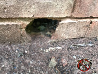 Ground level hole in the brick wall through which the rats got into the house