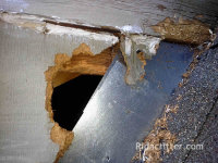Hole in wood above flashing gnawed by roof rats in Atlanta