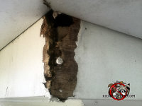 The joint at the junction of two frieze boards at a house in Atlanta Georgia has been gnawed away by roof rats
