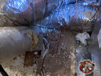 Squirrels tore through the outer covering of the flexible heating ducts in the attic of a house in Atlanta.