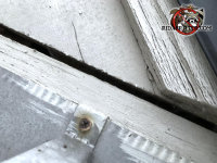 Quarter inch gap in the exterior wooden trim allowed yellow jackets into a house in Atlanta