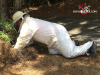 Exterminator in a protective bee suit removing a yellow jackets nest from the ground