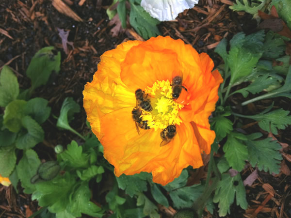 Honey bee picture taken by David at an Atlanta honey bee job
