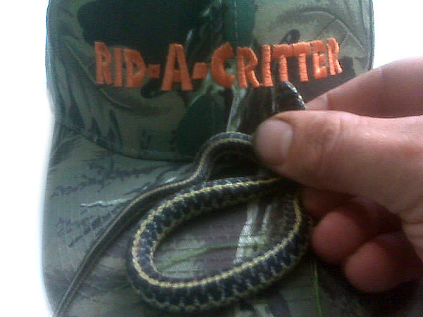 Garter snake removed from a garden in Atlanta